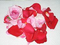 rose.salt.JPG